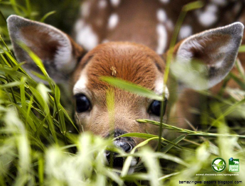 FunMozar – Cute Fawns Baby Deer