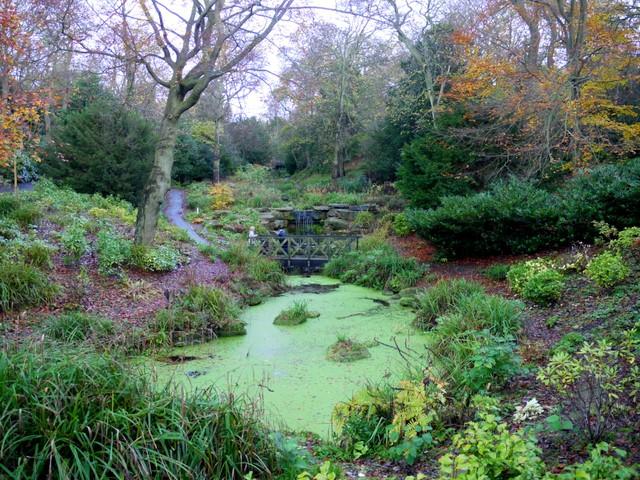 Water Garden Ideas best 25 small water gardens ideas on pinterest Water Garden Ideas