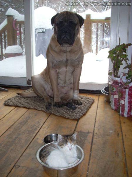 http://3.bp.blogspot.com/-n_mFxMRiIOk/TXXaRxOUblI/AAAAAAAAQaQ/CKA20xxLDOg/s1600/these_funny_animals_632_640_22.jpg
