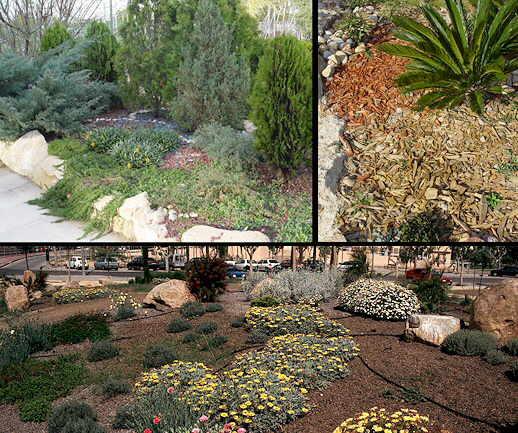 Yantra jardines con poca agua for Jardines que necesitan poca agua