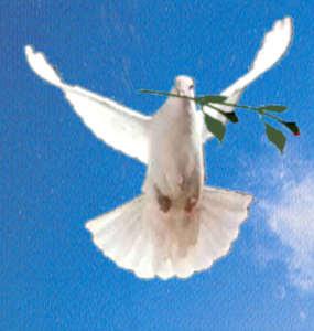 Llamamiento a la paz poringuera