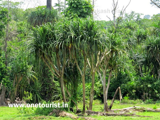 trek for lime stone caves , baratang , andaman