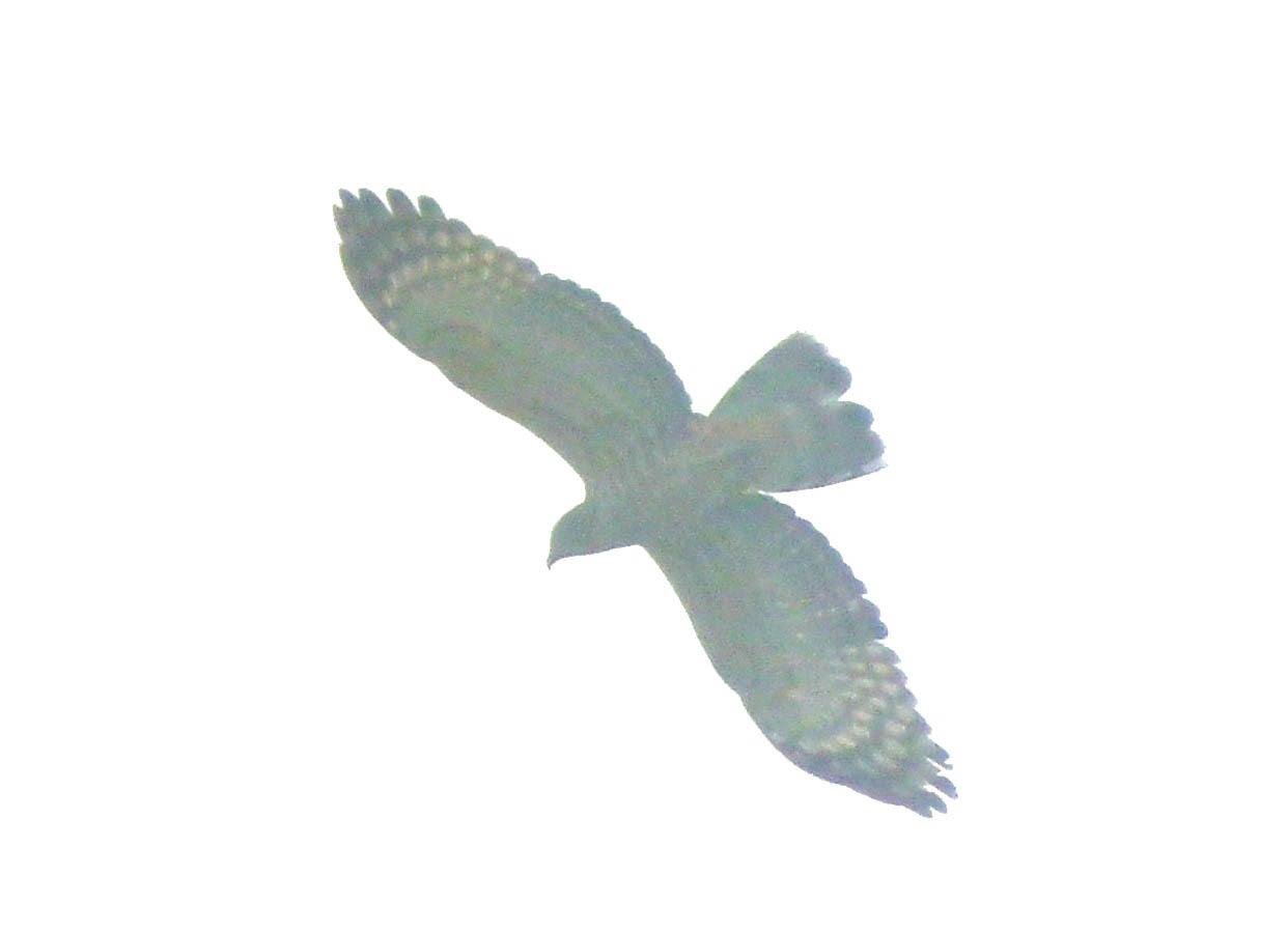 Vietnam Bird News  October 2011