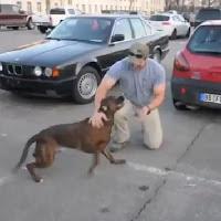 Cão dono