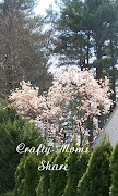 Pink and White Flowering Tree