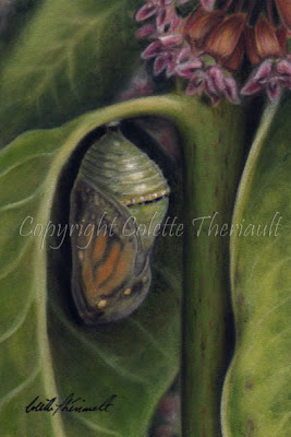 Pastel Painting of Monarch Butterfly Chrysalis Stage on Common Milkweed Plant by Colette Theriault