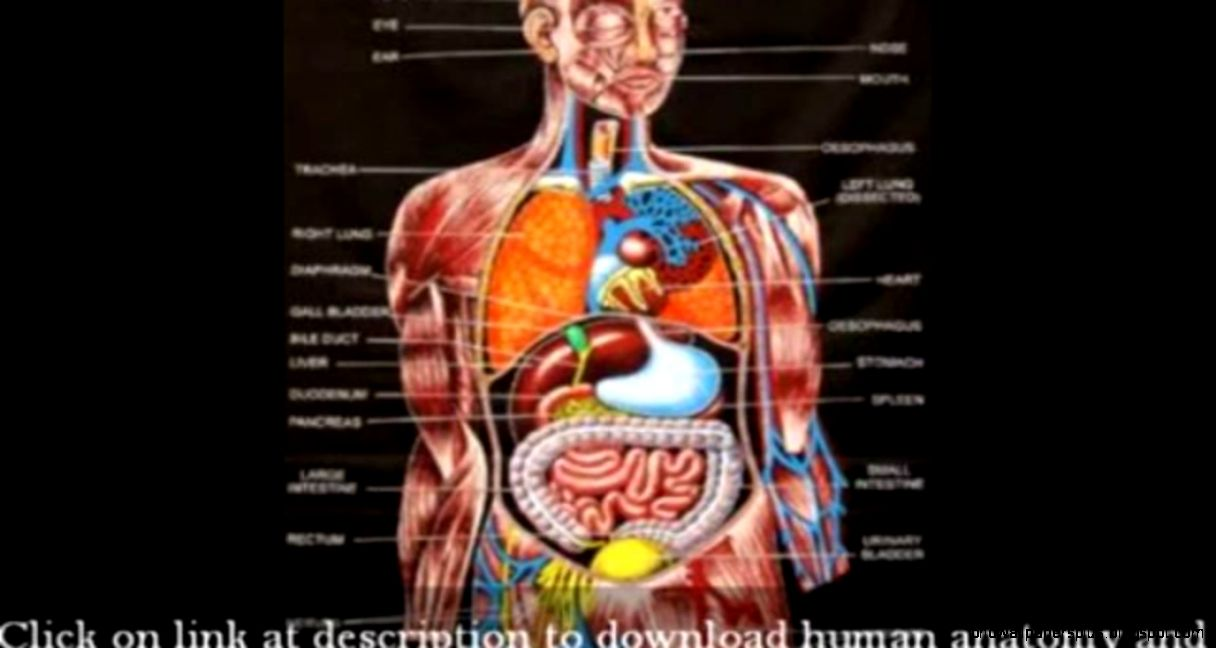 Human anatomy map
