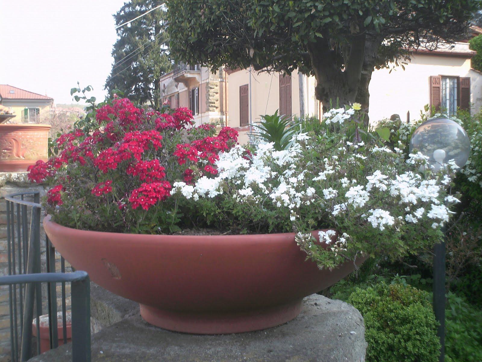 Fiori piante e giardini del mondo verbena - Giardini e fiori ...