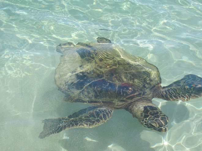 Swiming with Turtles at Moana Kea Beach