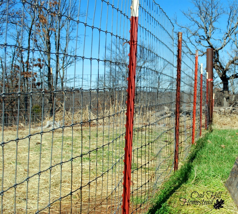 goat fencing that works