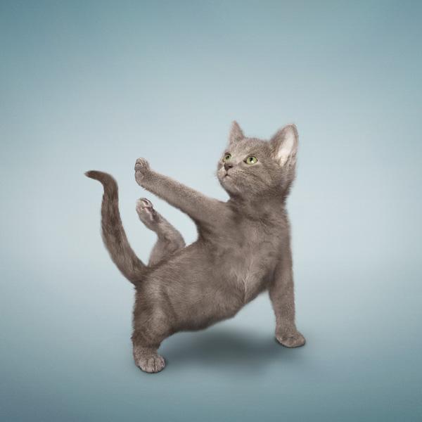 yoga gatos