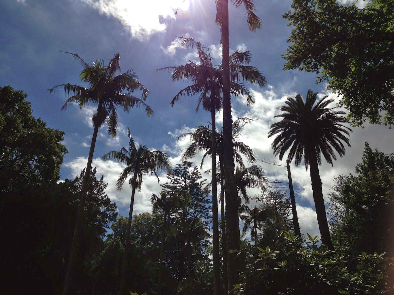 Palms at Terra Nosta Gardens