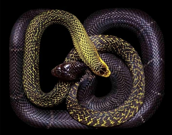 http://3.bp.blogspot.com/-nc0y7T-C4tQ/TpbPXQ2E_5I/AAAAAAAADAU/ta9Jb9PE_II/s1600/256706%252Cxcitefun-fascinating-snakes-07.jpg