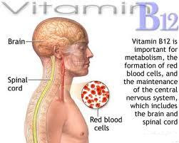 vitamin b12 cyanocobalamin is essential for human nutrition