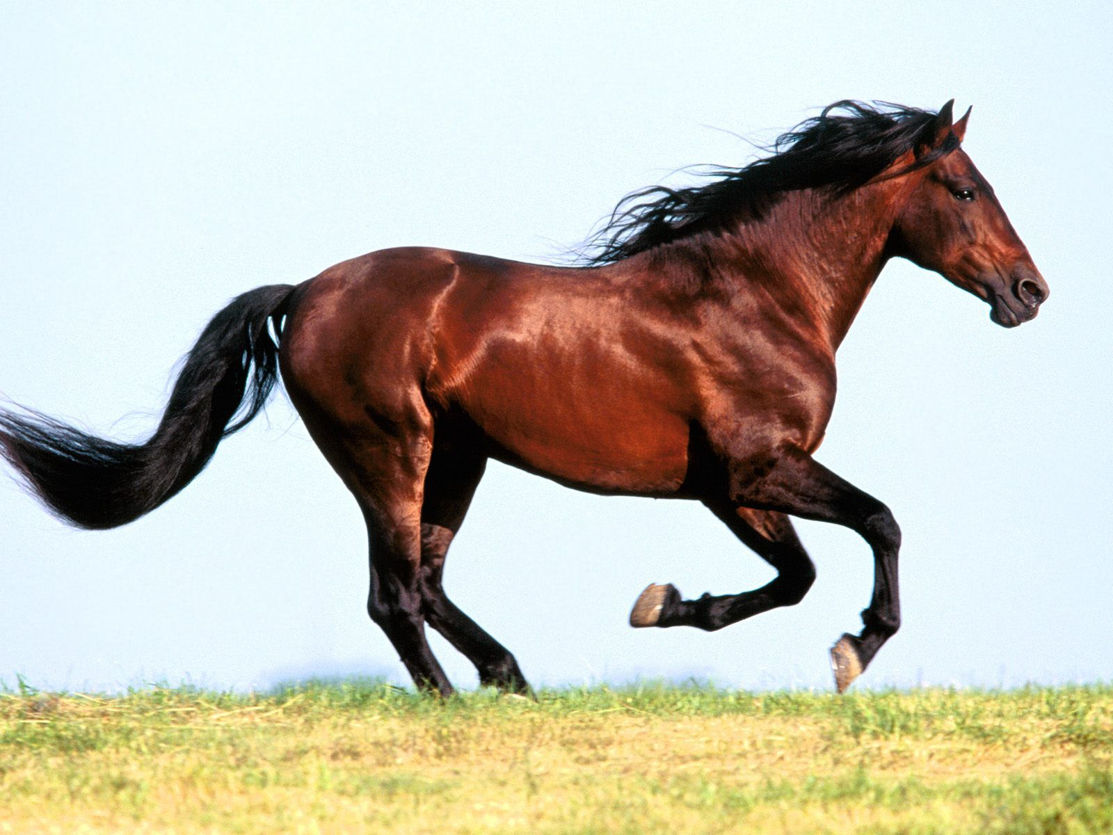 Lovely Horses Wallpapers Entertainment Only