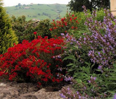 Disfrutar con el huerto y el jard n - Plantas de exterior resistentes todo el ano ...