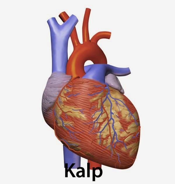 Vücudumuzu Tanıyalım: Kalbimiz