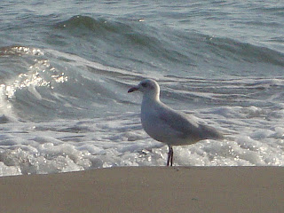 Wave and White sea bird