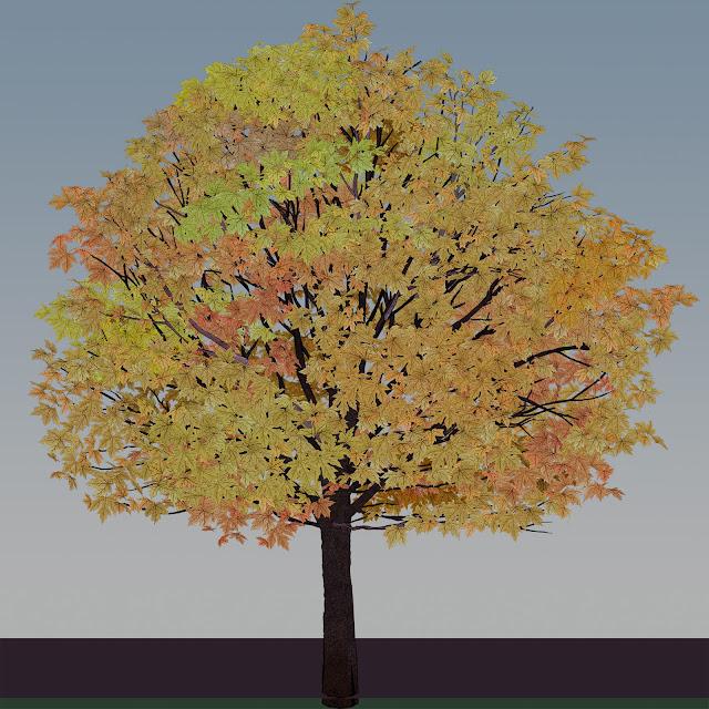 árbolm  otoño