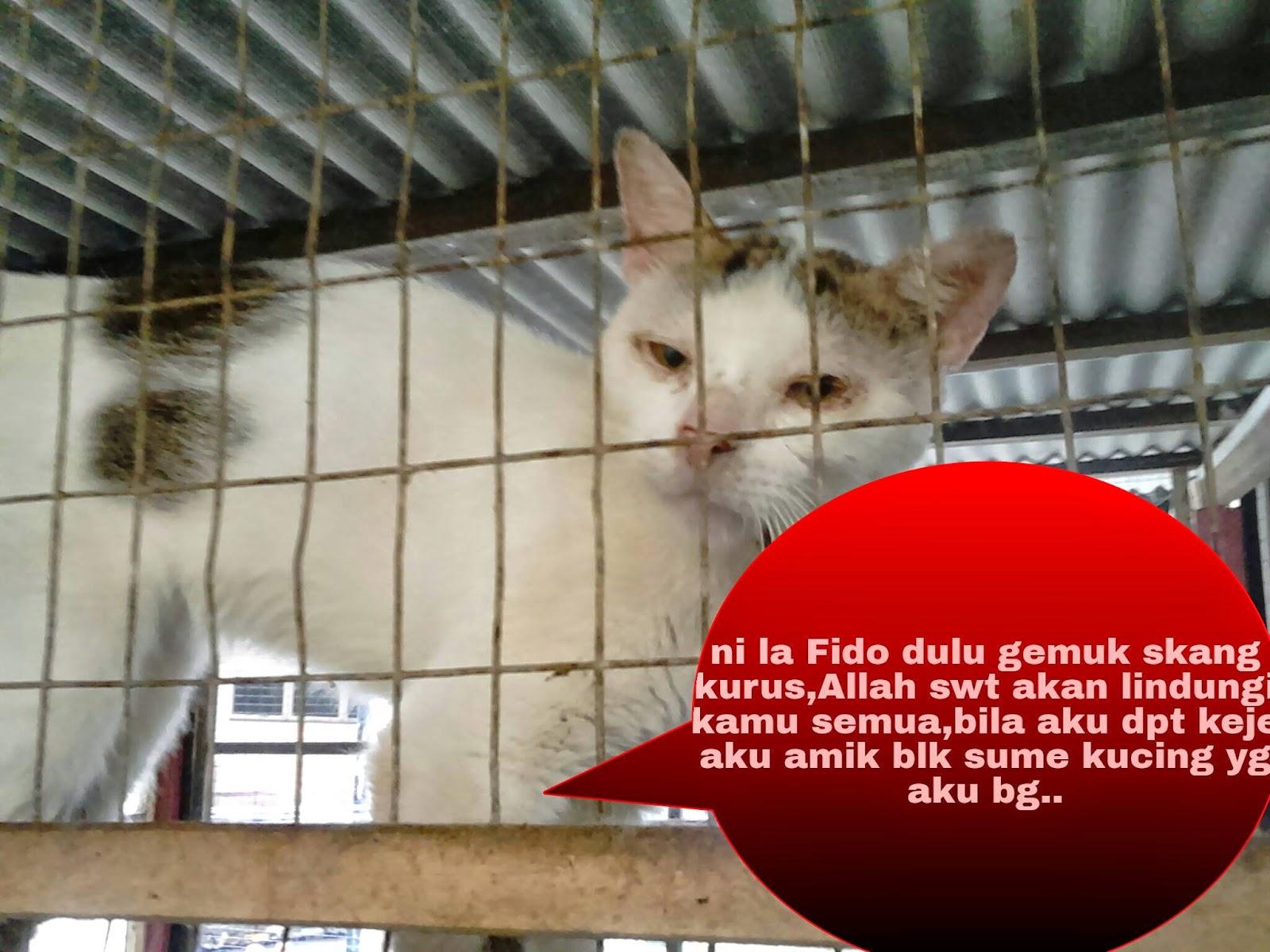 Lagi Luahan Amp Pendedahan Mangsa Kucing Dianiaya Omiey Home