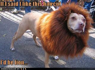 funny dog-15