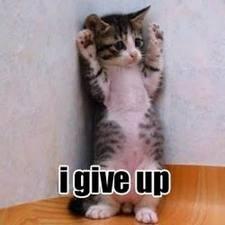 kucing menyerah, kucing sholat,