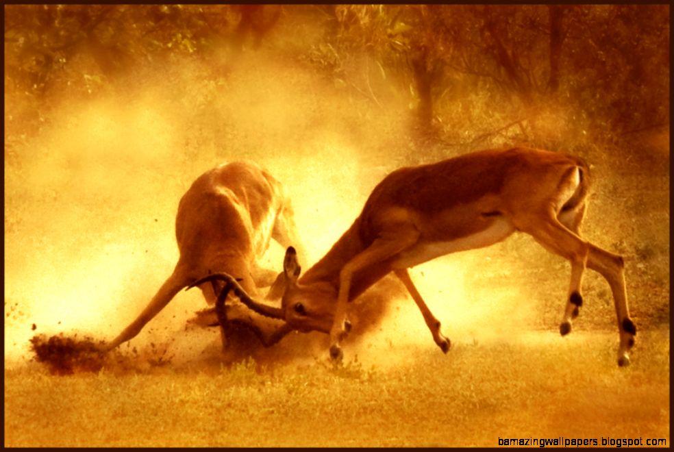 Best African wildlife photos on Flickr   Africa Freak Blog