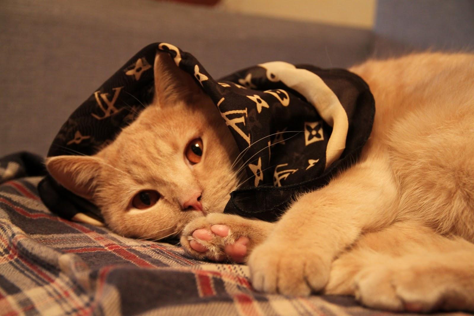 Фото кота-фетишиста
