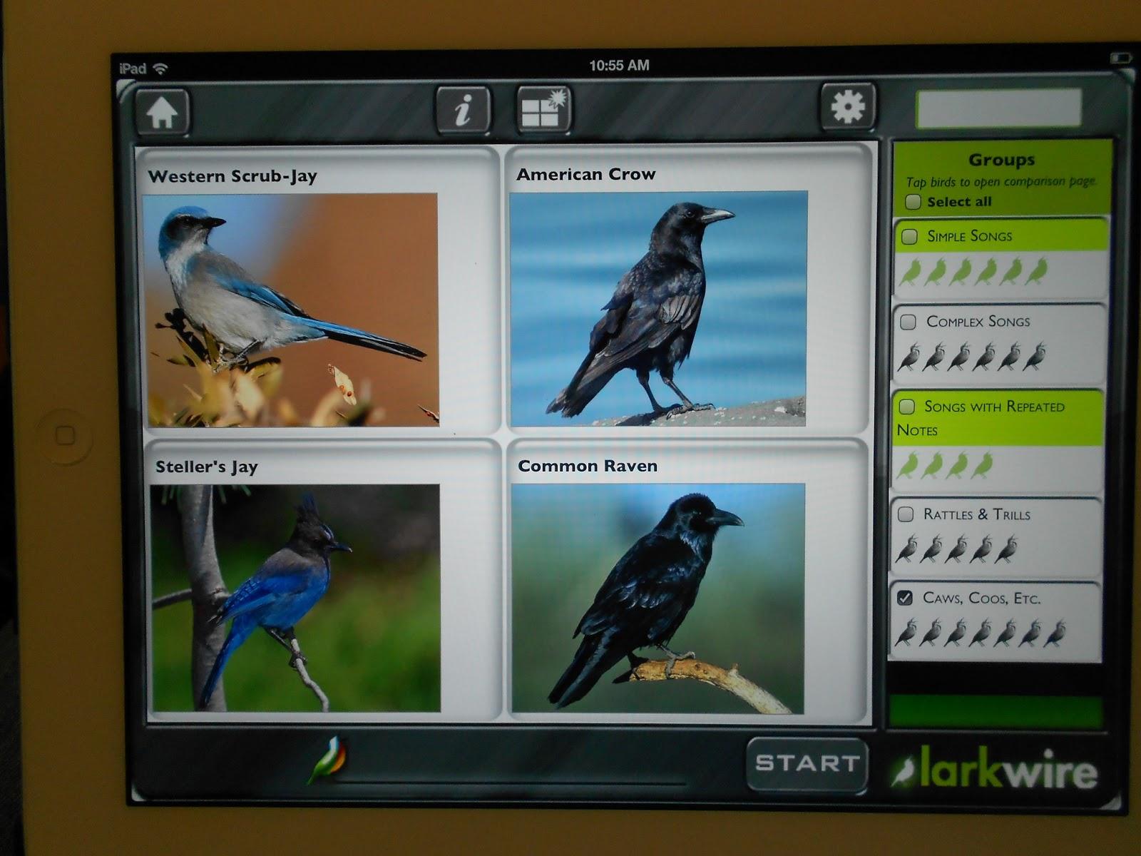 backyard birder and master birder u2013 larkwire app review