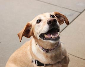 Kcmo Dog Adoption