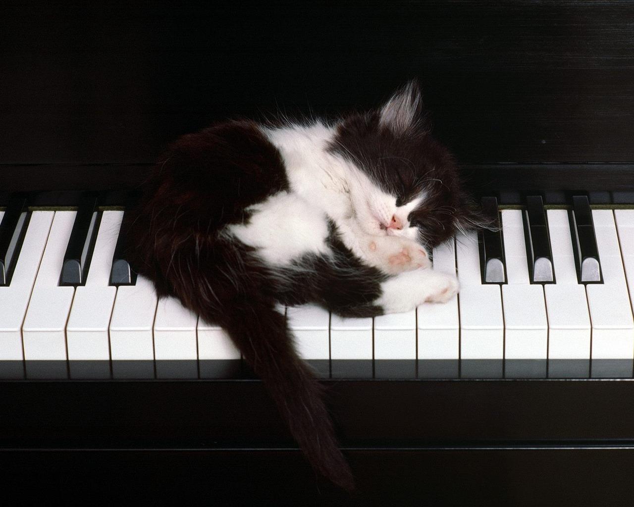 Beautiful Cute Cat Sleeping On Piano