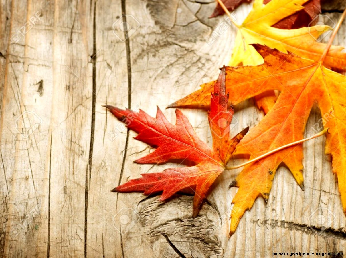 47 PC Fall Leaves Wallpapers in Top Collection