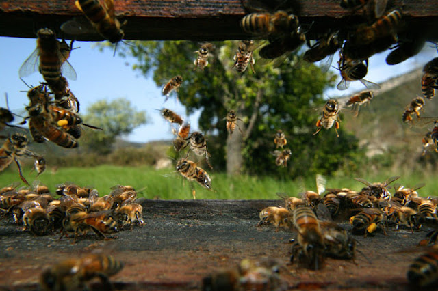 gathering of bee
