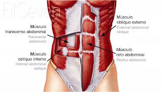 Abdômen forte e definido ajuda na Hérnia de Disco