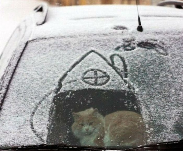 Funny cat pictures part 14, cat in a car covered with snow