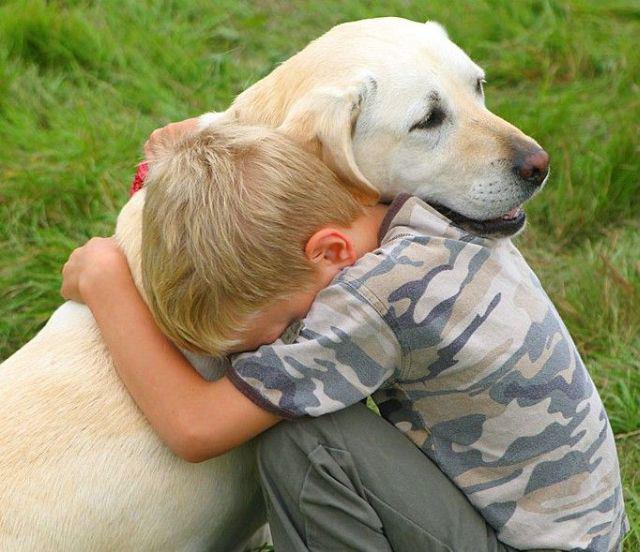 Caninecomfort.jpg