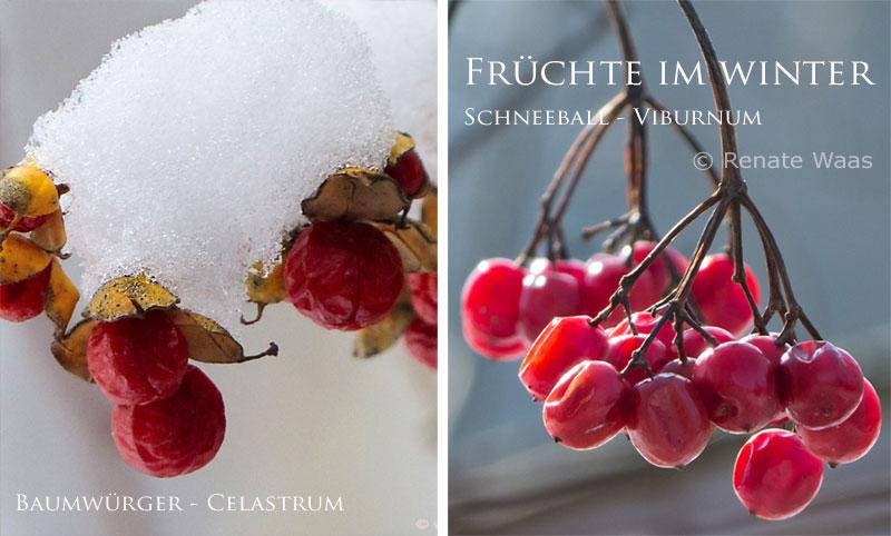 Im winterlichen Garten kann man mit roten Beeren und bunten Früchten schöne Akzente setzen