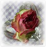 Følg Fjellbua på Instagram!