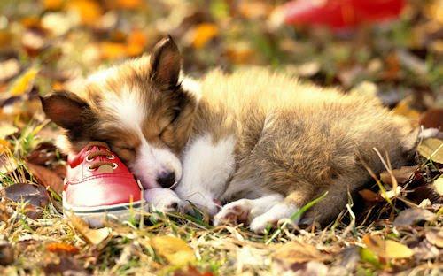 Fotografías de perritos y cachorros