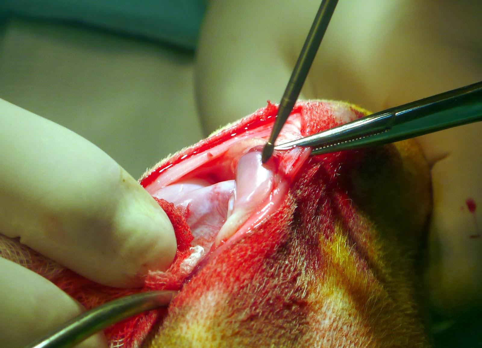 tratamiento patelopatia