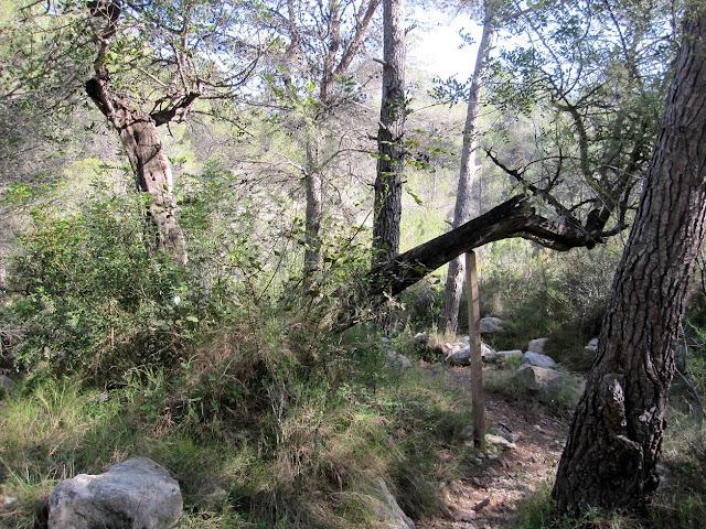 Barranc de la Font del Mondúver