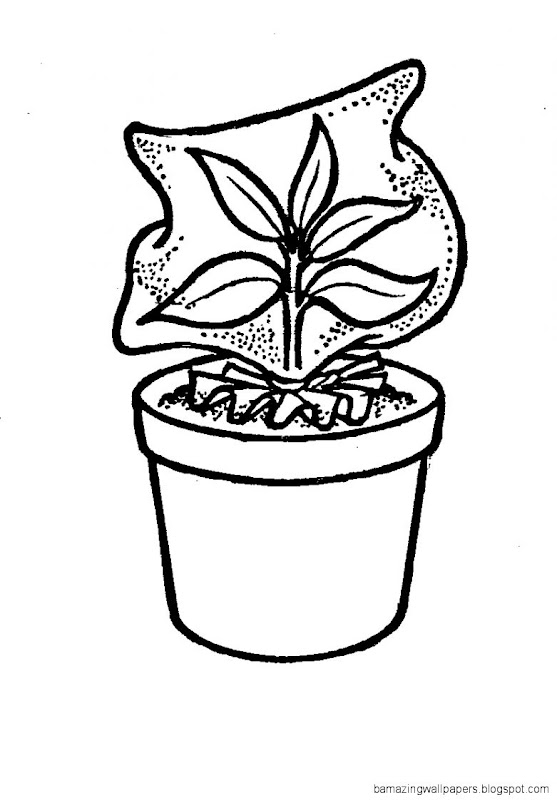 Potted Plant Drawing  Clipart Panda   Free Clipart Images