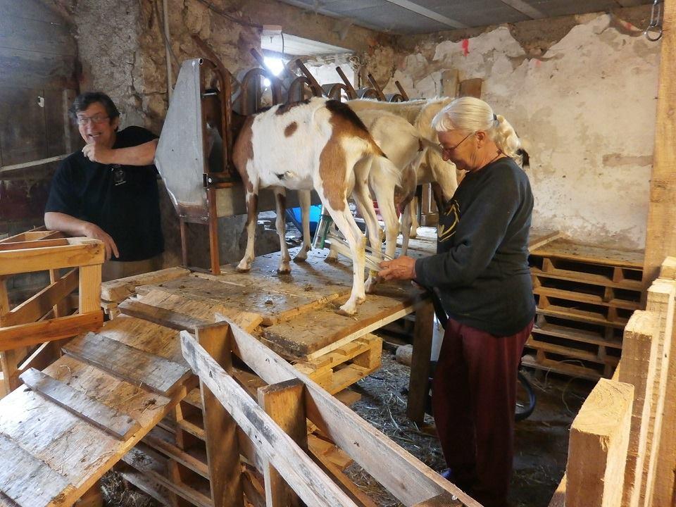 La ferme de l rob juin 2015 for Chevre pour couper le bois