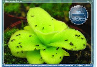 http://primerodecarlos.com/CUARTO_PRIMARIA/septiembre/unidad1/actividades/naturales/plantas_carnivoras.swf