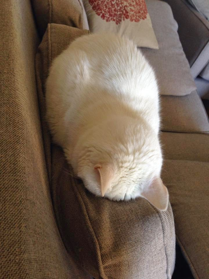 Funny cats - part 127 (40 pics + 10 gifs), cat photos, adorable cats, funny picture