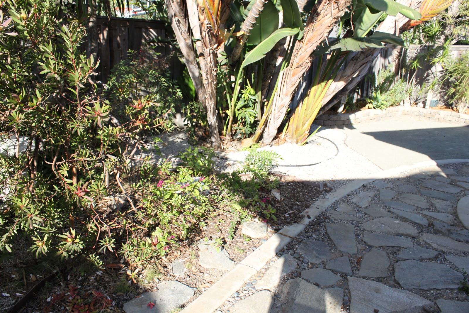 midcentury modern landscaping