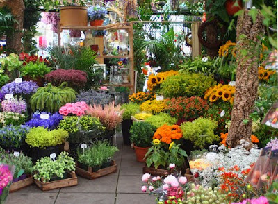 fotos de flores - vivero