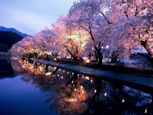 Beautiful Spring Pictures Custom With Beautiful Spring Japan Images