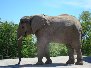 No more elephants at the Toronto Zoo