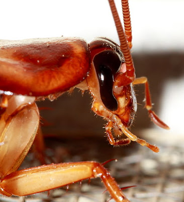 2 Cockroaches 10 of the Most Common, Weird and Creepy Animals as Pets